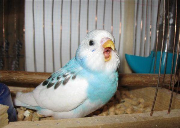 Κατάγματα (παπαγάλοι)