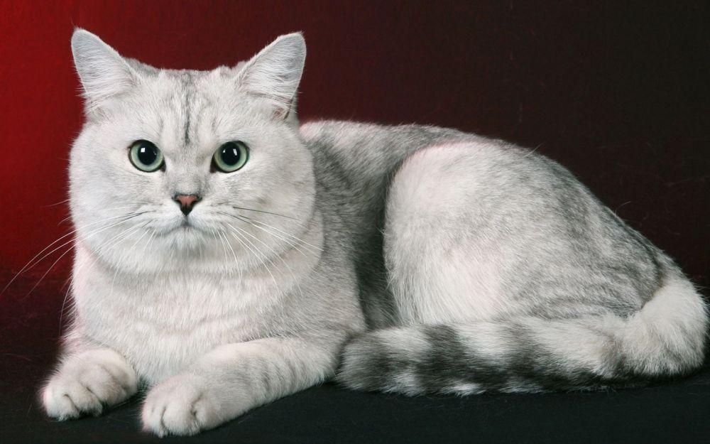 Δερματικές παθήσεις - Γάτες