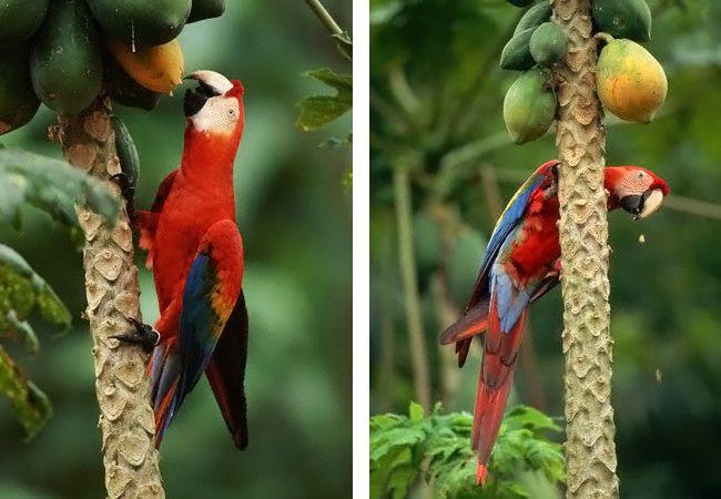 Σκουλήκια των τριχών (παπαγάλοι)