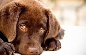 Τροφική δηλητηρίαση - Σκυλιά