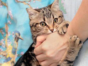 Όταν η γάτα πονάει μόλις την αγγίζουμε