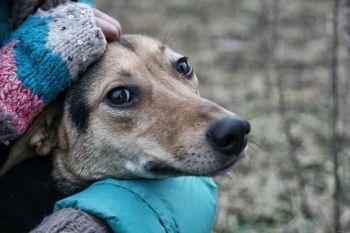 Τοξοπλάσμωση - Σκυλιά