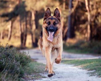 Ένα υγιές σκυλί