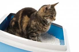 Δυσκολία στην ούρηση μιας γάτας