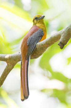 Διαταραχές της αλλαγής του φτερώματος - καναρίνια