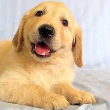 Λύσσα - Σκυλιά