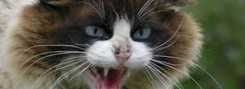 Η λύσσα και οι νομοθετικές διατάξεις για την καραντίνα (γάτες)