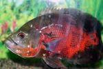 Τα σπουδαιότερα συμπτώματα ασθενειών - Ψάρια