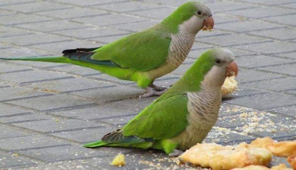 Πρόγραμμα διατροφής για μικρότερους παπαγάλους