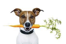Η διατροφή του ενήλικου σκύλου
