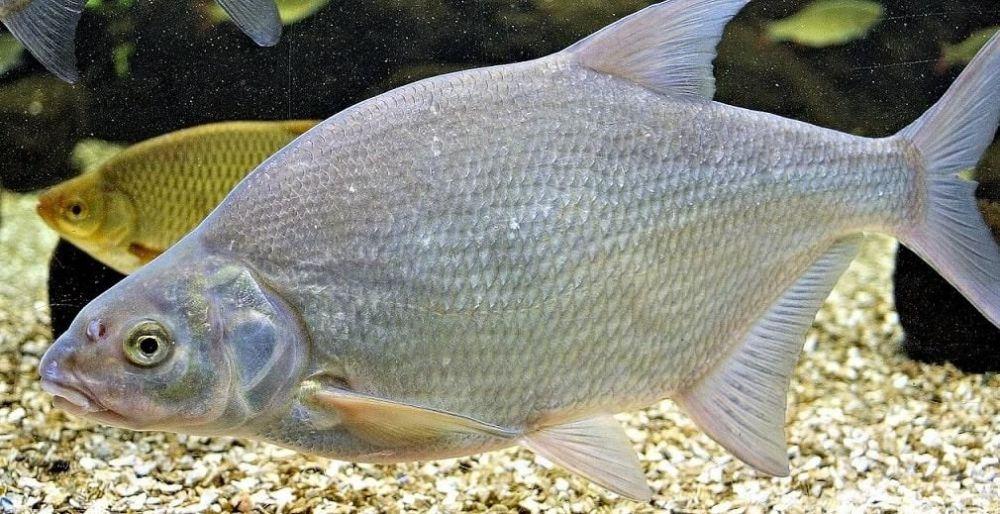 Βιομηχανοποιημένη τροφή - ψάρια