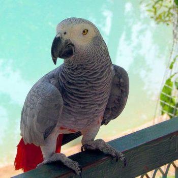 Φύτρα για τους παπαγάλους