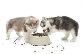 Η διατροφή του κουταβιού