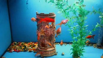 Βασικά της διατροφής ψαριών