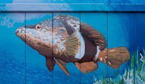 Ζωντανή τροφή - Ψάρια