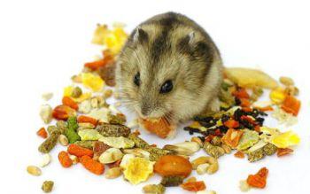 Φυτικές και χυμώδεις τροφές για Χάμστερ