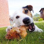 Λιπίδια - Υδατάνθρακες (σκυλιά)