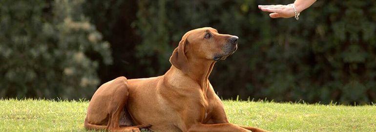 Μέθοδοι και στόχοι εκπαίδευσης σκύλων
