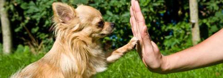 Διάρκεια εκπαίδευσης σκύλου