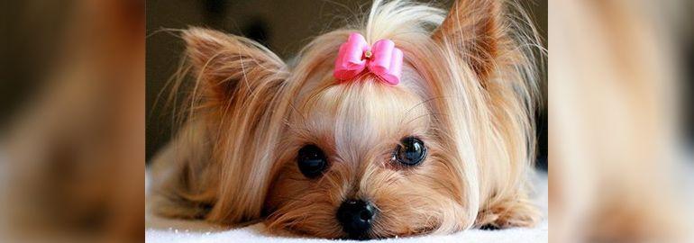 Παράγοντες επηρεασμού σκύλων
