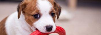 Η πιο κατάλληλη ηλικία για εκπαίδευση σκύλου