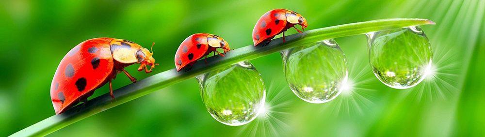 Γενικά για τα έντομα