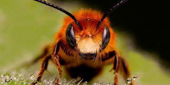 Τι τρώνε τα έντομα