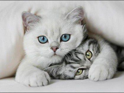 Πως επικοινωνούν οι γάτες
