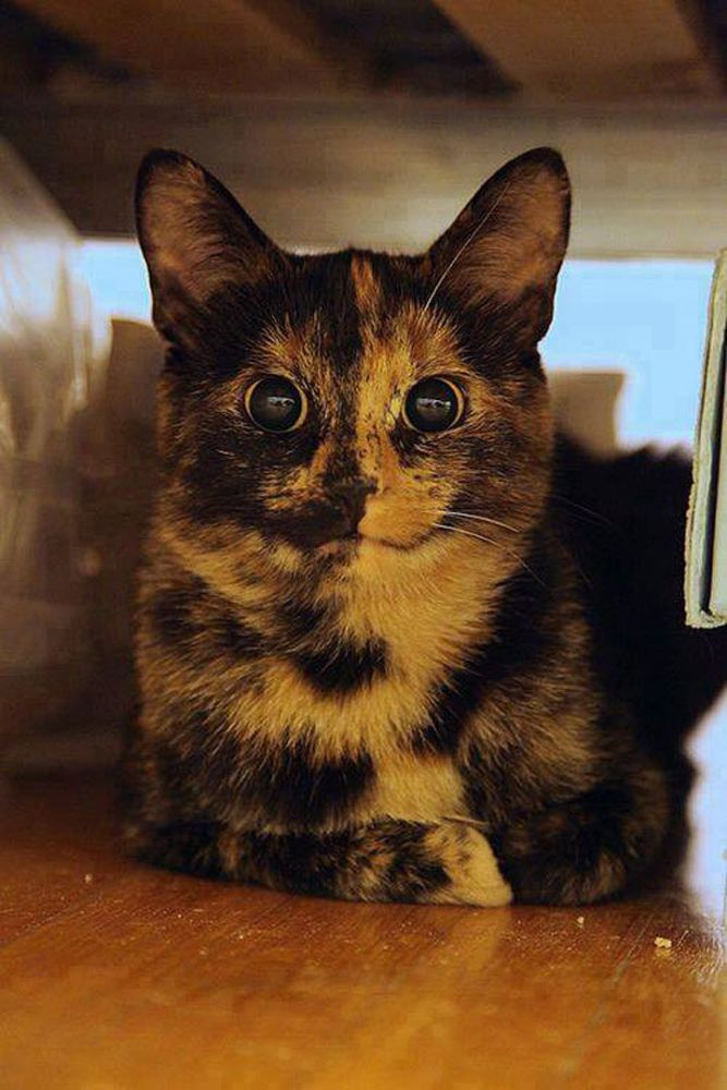 Δίχρωμη γάτα