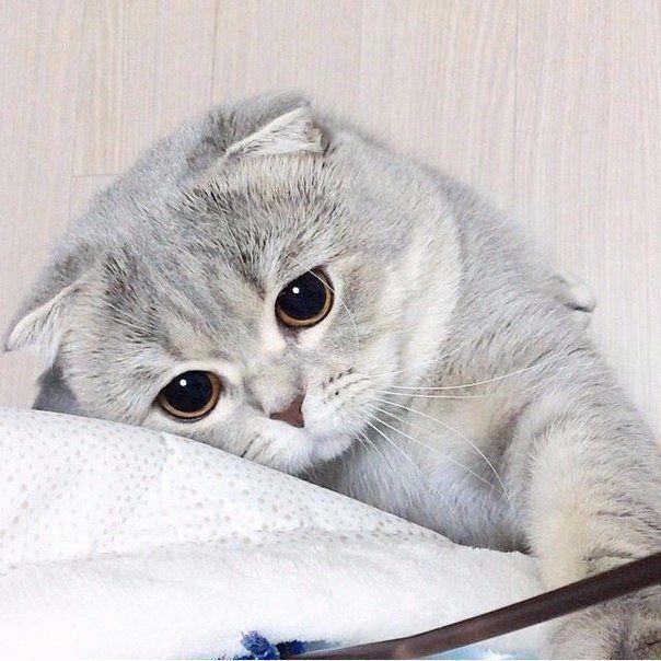 Όταν η γάτα μας γλύφεται η ξεροκαταπίνει