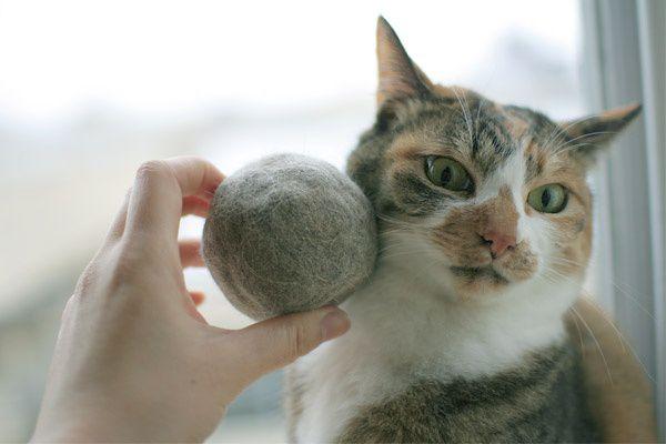 Το δέρμα και το τρίχωμα στις γάτες