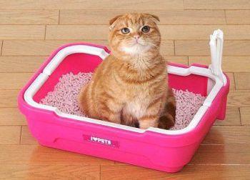 Διάρροια και δυσκοιλιότητα στις γάτες