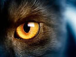 Τα μάτια της γάτας