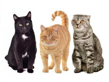 Πως διαλέγουμε μια γάτα