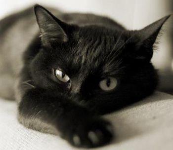 Το πεπτικό σύστημα της γάτας