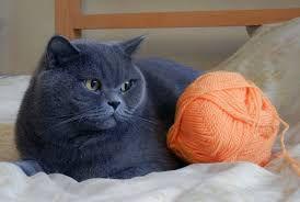 Μπλε γάτα