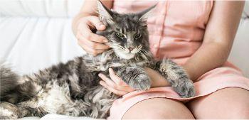 Προσαρμογή της γάτας στο ανθρώπινο περιβάλλον