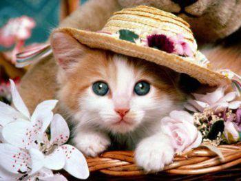 Διακοπές (γάτες)