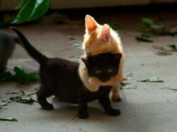 Όταν σταματήσει το γατάκι να θηλάζει