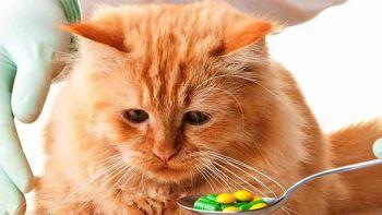 Αν η γάτα καταπιεί κάποια βλαβερή ουσία