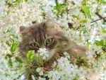 Ολοκόκκινη γάτα