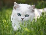 Όσφρηση και γεύση στις γάτες