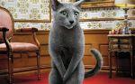 Πως θα μάθει να λερώνει μια γάτα εκεί που πρέπει