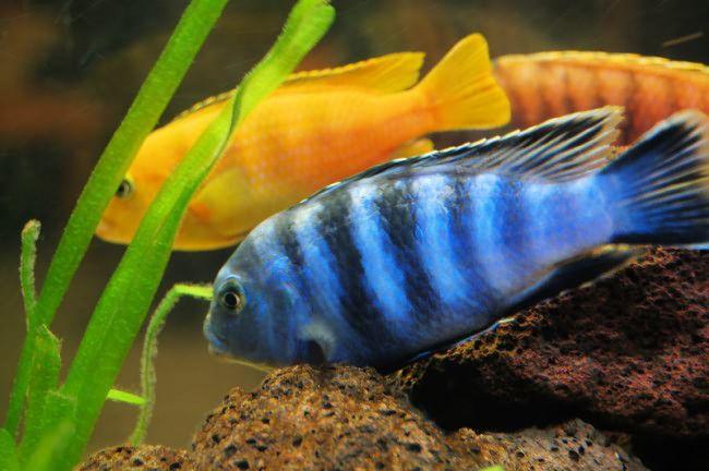 Τα τροπικά ψάρια χρειάζονται ζέστη (ενυδρεία)