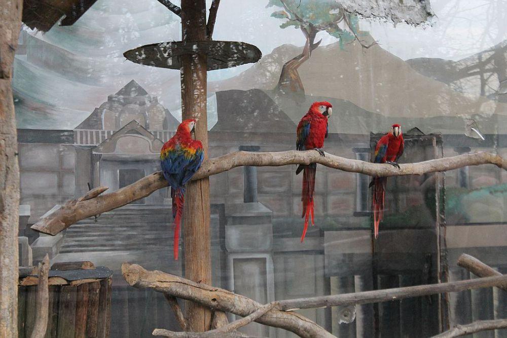 Οι παπαγάλοι στο μεγάλο κλουβί δωματίου