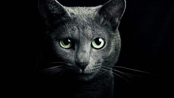 Πρέπει να βγάζουμε τη νύχτα τη γάτα έξω;