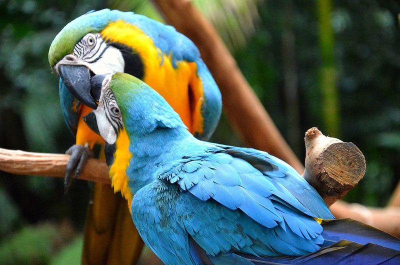 Παπαγάλοι στο δέντρο αναρρίχησης