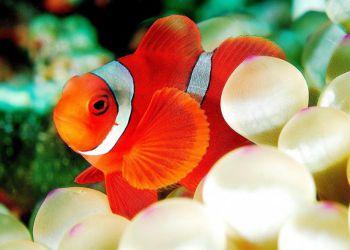 Τι πρέπει να προσέξετε κατά την αγορά των ψαριών