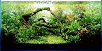 Προϋποθέσεις για υγιή φυτοκαλλιέργεια (ενυδρεία)