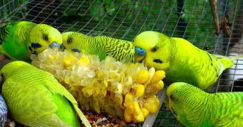 Τρόφιμα και ευφραντικά για τον παπαγάλο